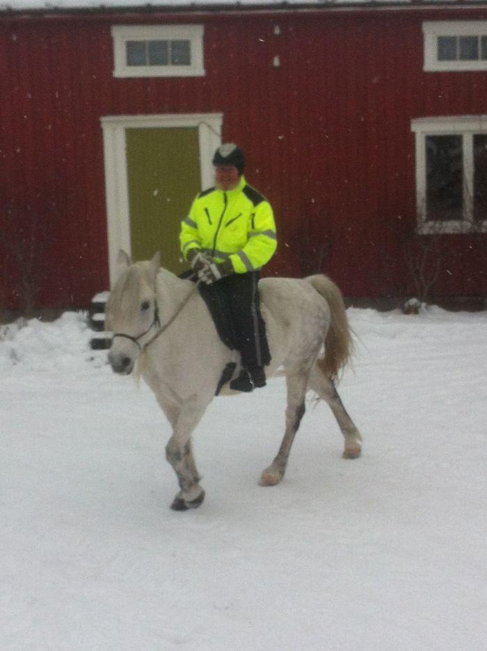 Kommunelegen til hest